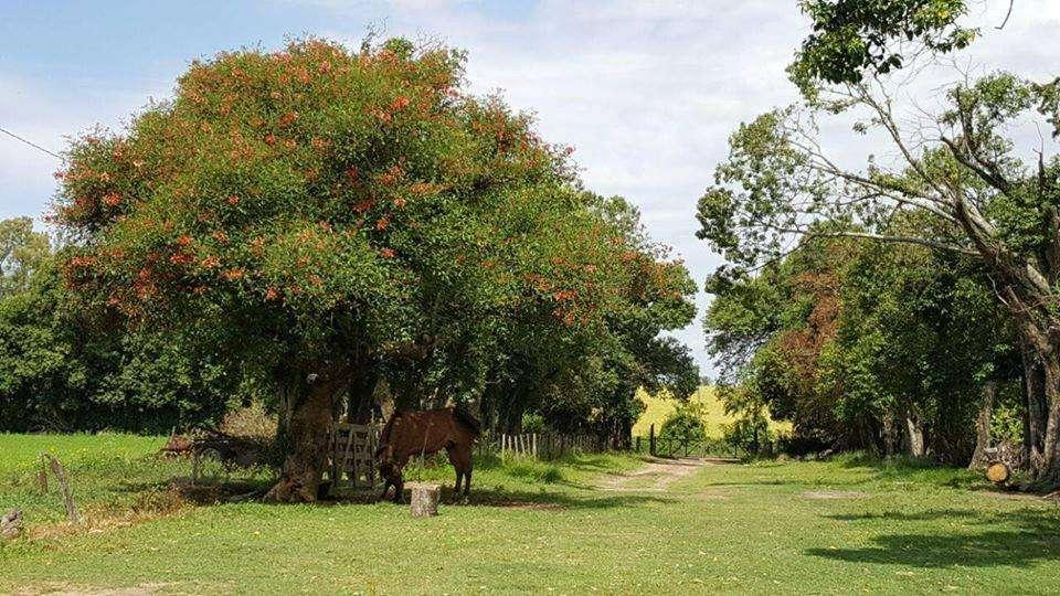 <strong>campo</strong> Zona Acceso Norte de Paraná