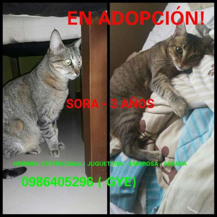 Gata en Adopción