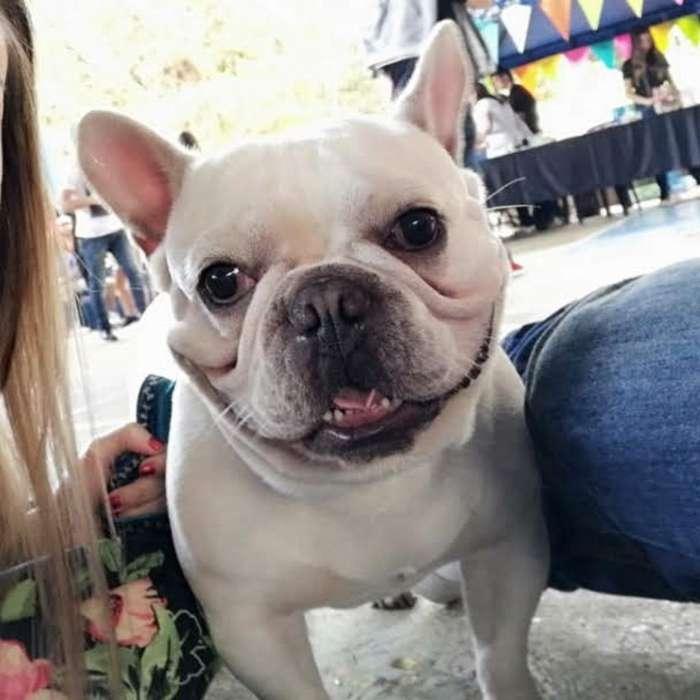 Soy Cosmo Y Busco Novia <strong>bulldog</strong> Francés