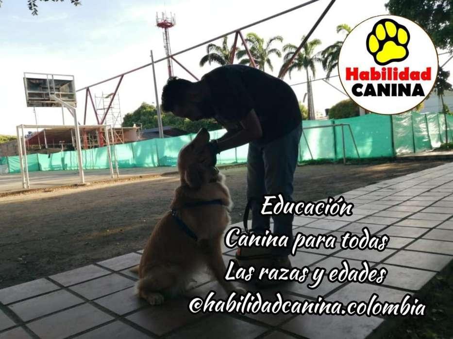 Entrenador Canino