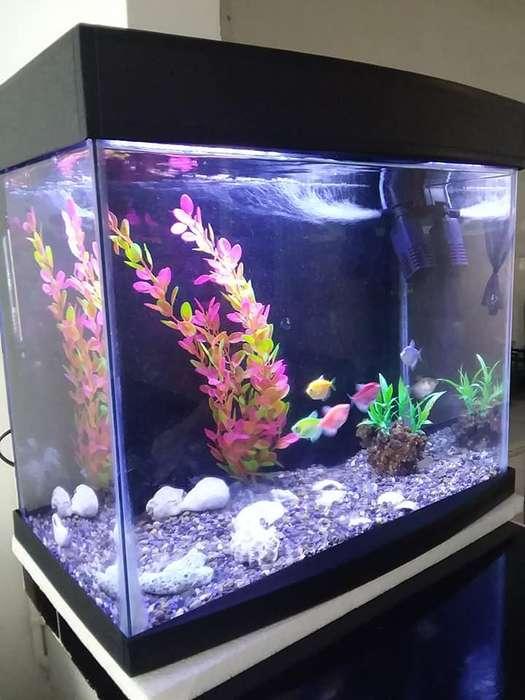 acuario con todo incluido