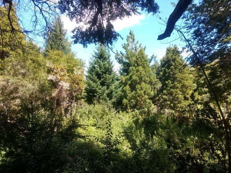 Excelente fracción en el bosque de Llao Llao en Reserva Natural Urbana, ideal cabaña residencial