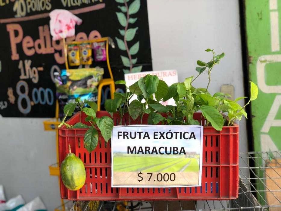 Plantulas de Maracuba