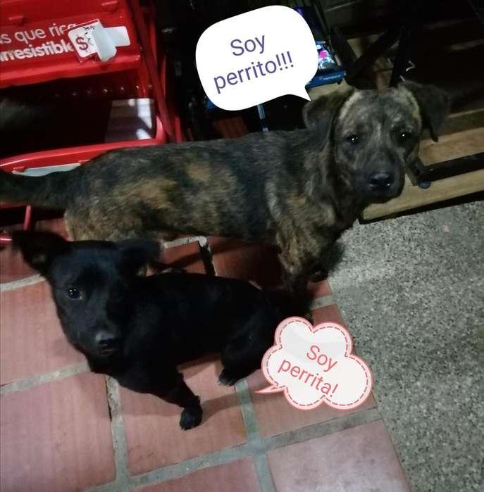 Se da pareja de <strong>perros</strong> en adopcion
