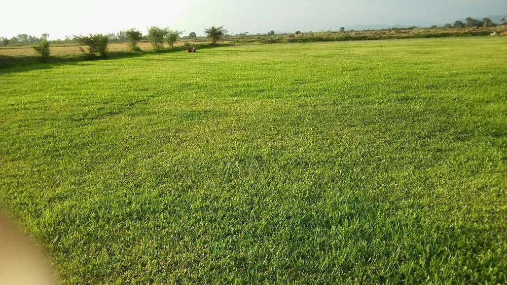 Venta de grass natural
