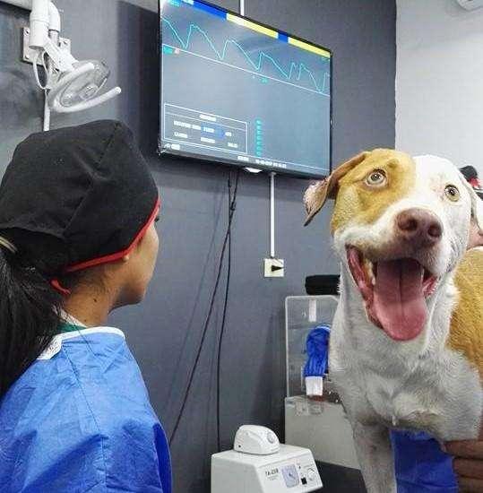 Servicios <strong>veterinario</strong>s a Domicilio