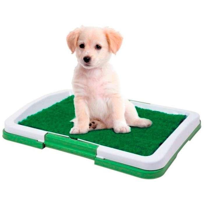 Tapete De Entrenamiento Para Perro Pequeño, Puppy Potty Pad