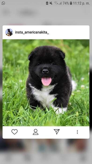 Adopto Cachorro