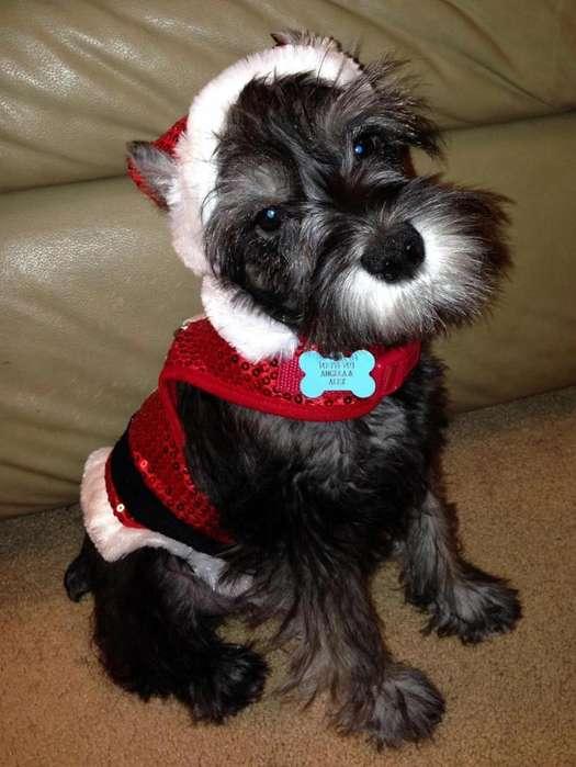 Traje <strong>perro</strong> Navidad