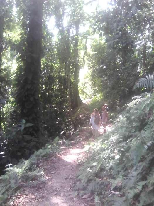 VENTA DE FINCA DE 27 HECTÁREAS CON 7 hectáreas DE BOSQUE PRIMARIO, SANTA MARTA, MAGDALENA,