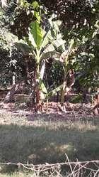Vendo Lotes en Sector Cauca Seco