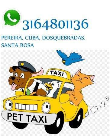 taxi para <strong>perros</strong>