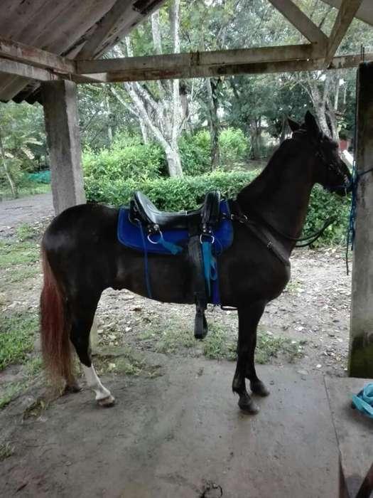Vendo <strong>caballo</strong> Troton