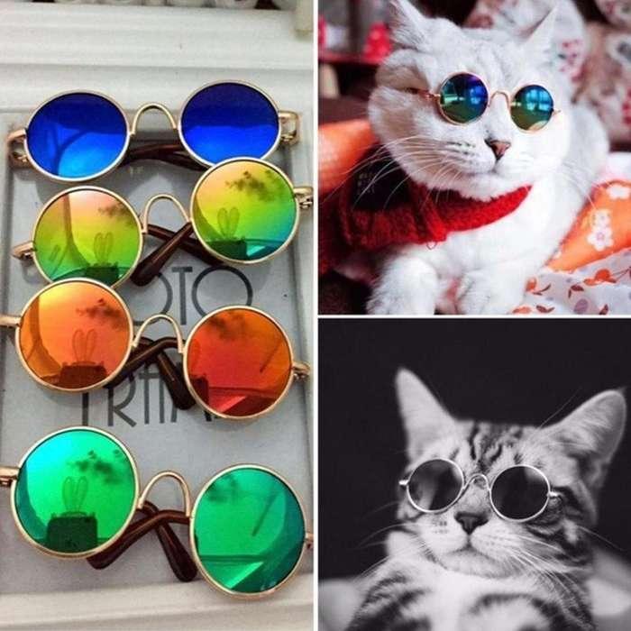 Gafas para gatos o perros de razas pequeñas