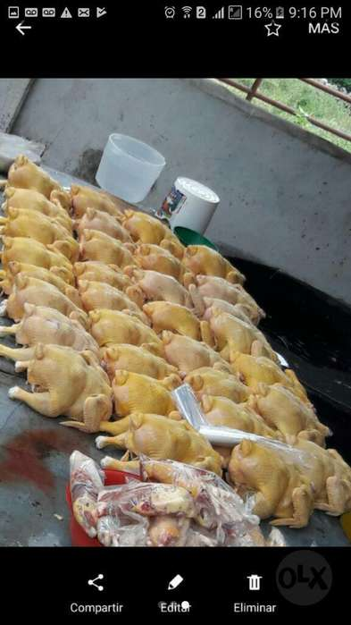 Pollo Semi Criollo