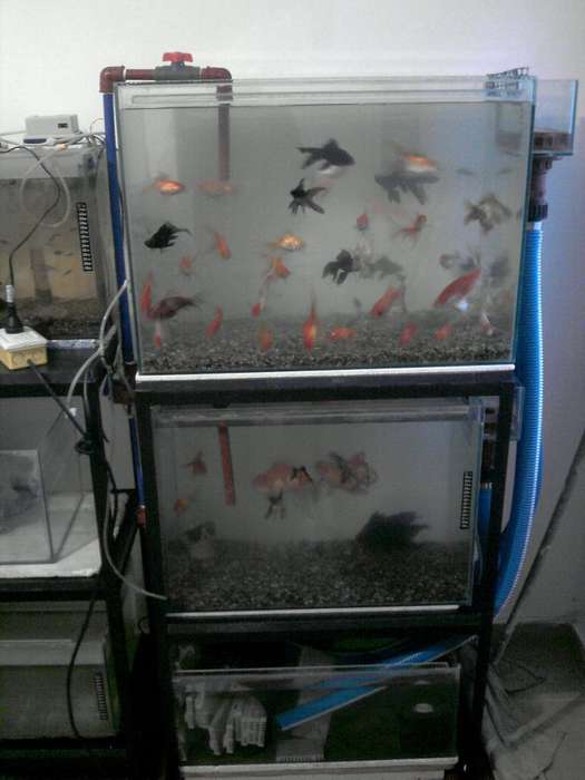 Sistema de acuarios, ideal para marinos