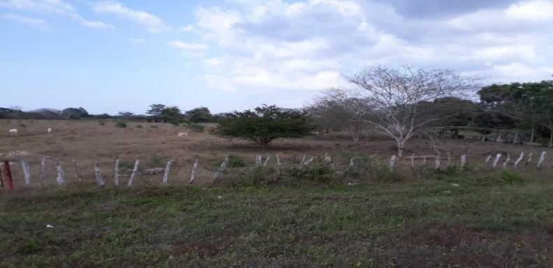 BAYUNCA, LOTE DE TERRENO CON 40 HECTAREAS IDEAL PARA PROYECTO VIS