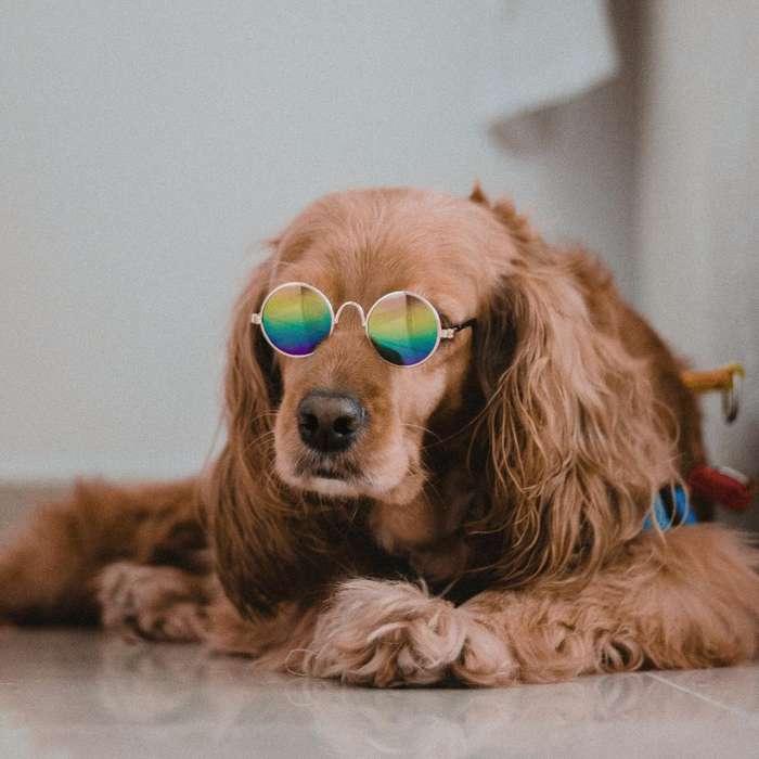 Gafas para Perro Pequeño O Gato