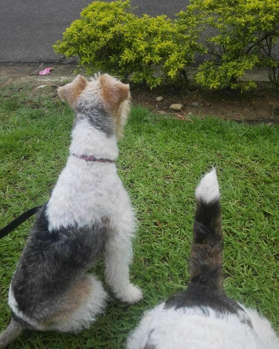 Cuidado Y Paseo de Mascotas