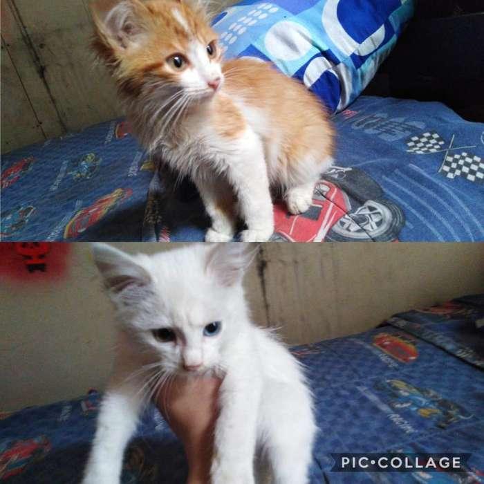 Gatitos Machos de 3 Meses en Adopción