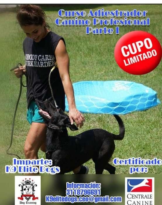Curso de Formación <strong>adiestramiento</strong> Canino