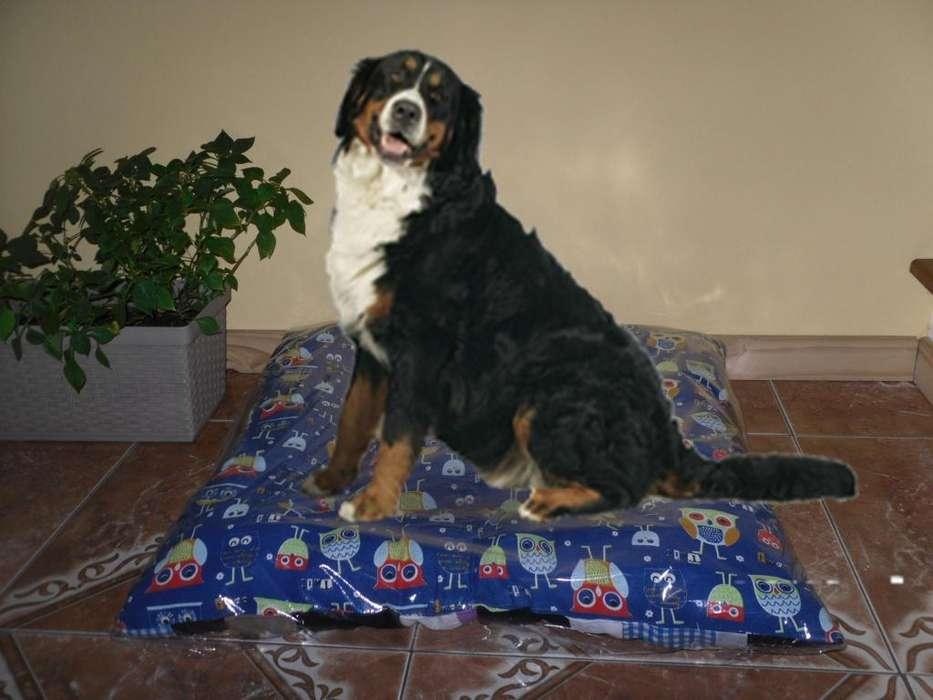 Fabricante de camitas para mascotas - Alma & Tuina - SUPER PRECIOS!!!