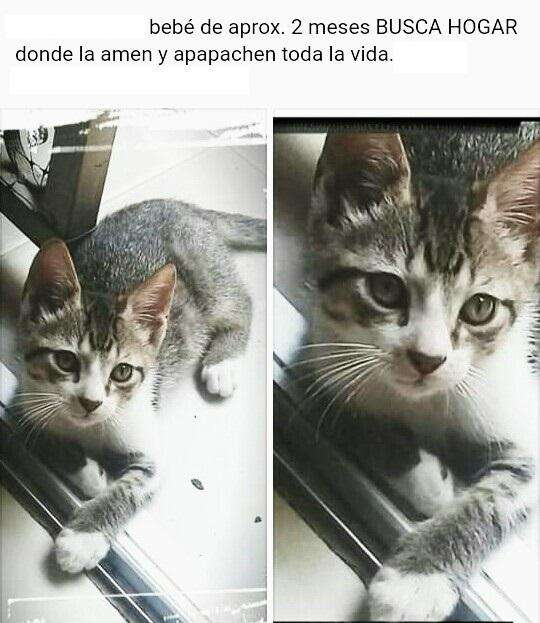 Hermoso gato para adopción