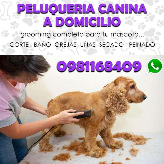 Peluqueria canina a domicilio peluquero canino estilista canino