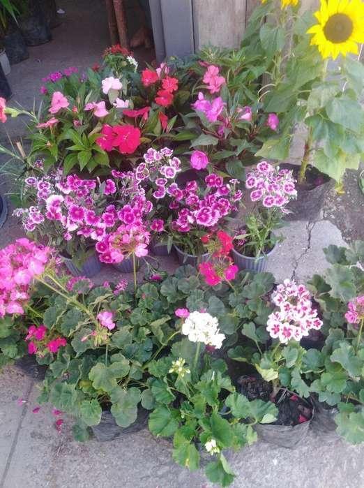 Se Vende Plantas Decorativas