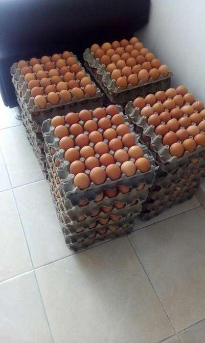 Venta de Huevos Doble Aa Y Triple Aaa