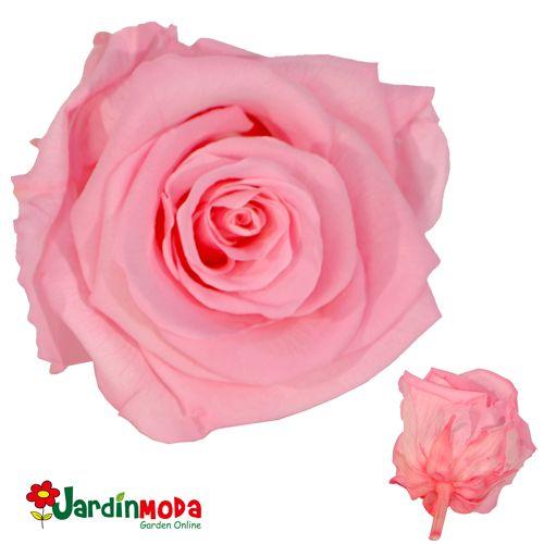Rosas preservadas eternas y naturales colores variados tamaño large