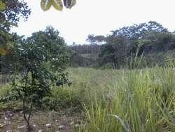 Finca con Teca en Zapotal Los Rios