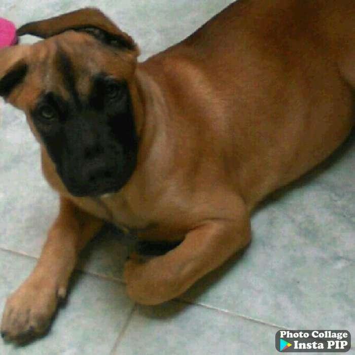 Doy en Adopción Lindo Perro 3 Años
