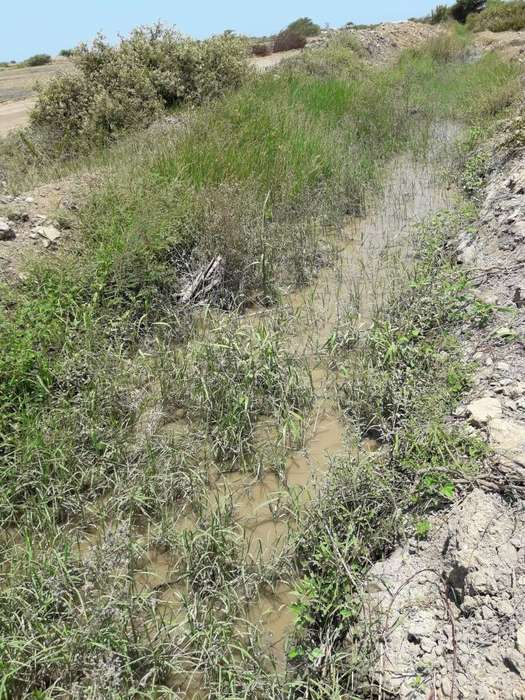 Terreno agricola 10.20 Has Paijan 3ra et. Chavimochic La Libertad