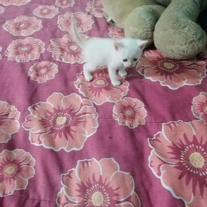 Se Da en Adopcion Gatitos Hermosos