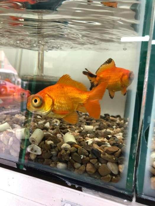 Vendo <strong>peces</strong> de Toda Especies