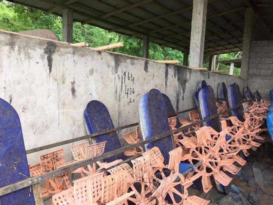 Areadores bomba comedores canoa para Camaronera