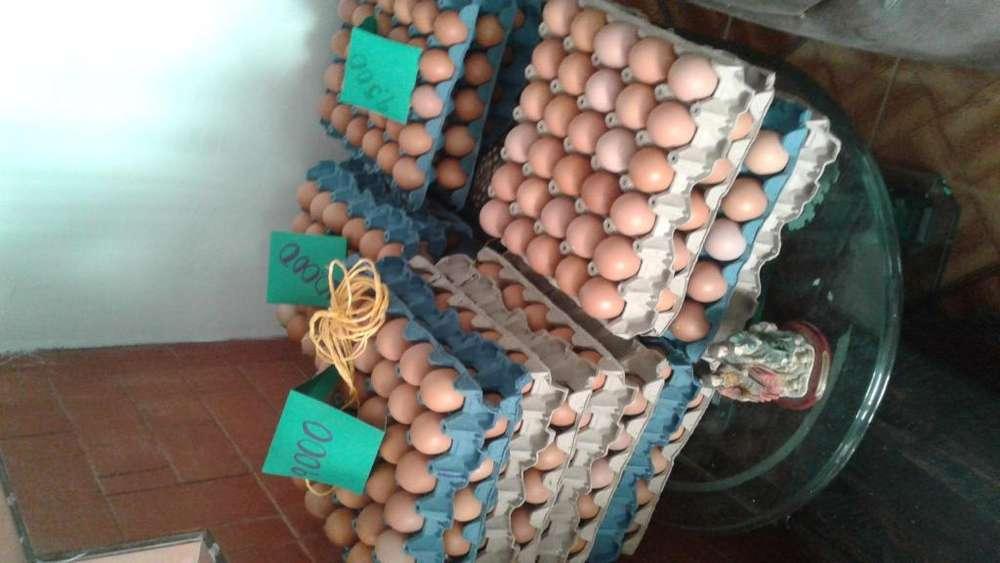 Huevos campesinos libres de quimicos alimentacin orgnica