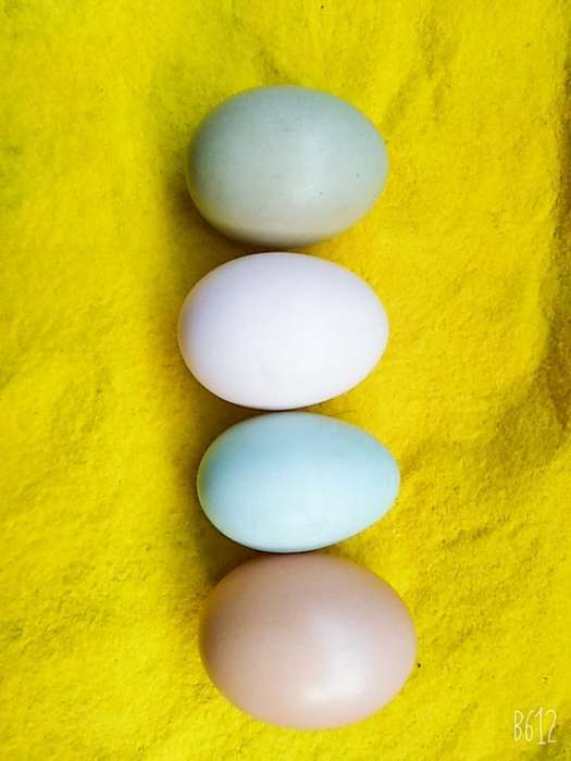 Huevos de Corral 'huevos Felices'