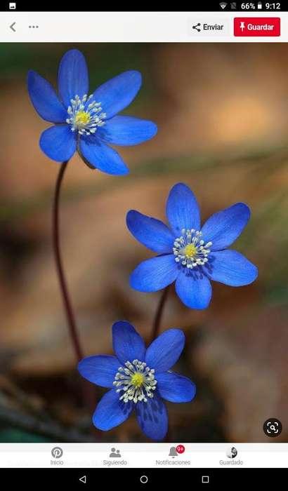 Ca cuadro Flores Azul