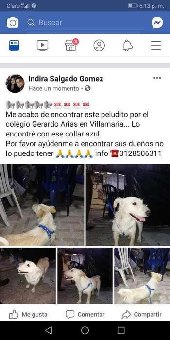 Perro Perdido en La Pradera Villamaria
