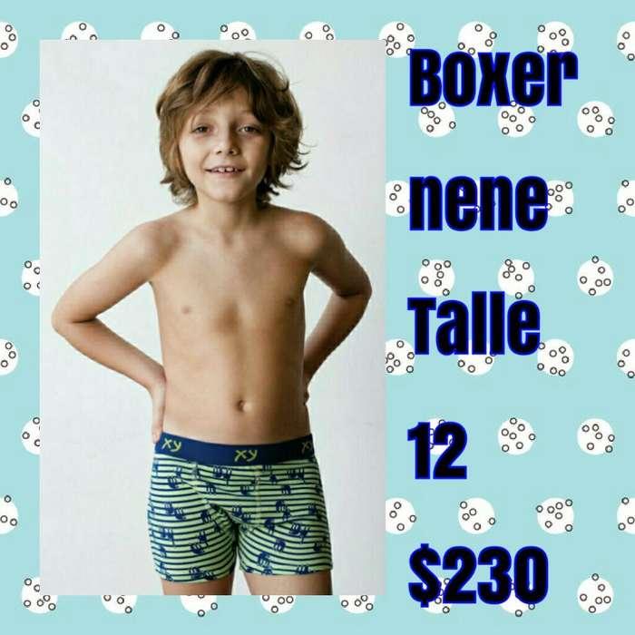 Boxer Nene T. 12