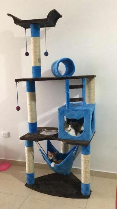 Gimnasio Rascador Para <strong>gato</strong> Obsequio Juguete!!