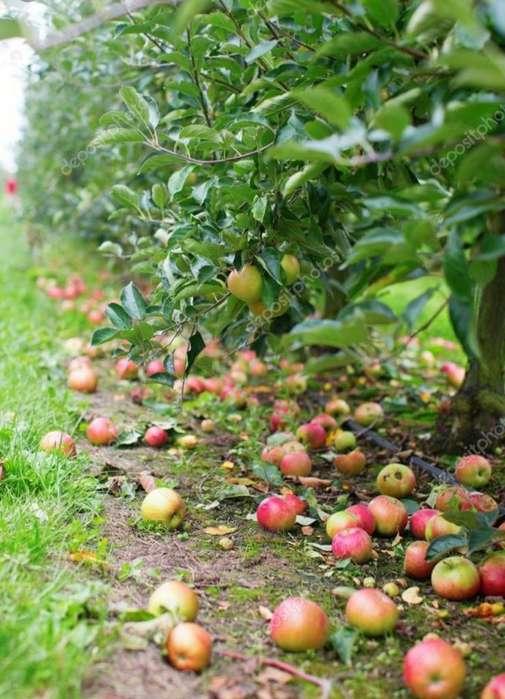Terreno Com Manzana en Produccion