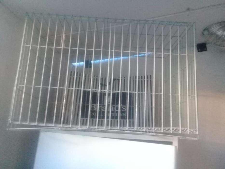 Vendo <strong>jaula</strong> para Conejo