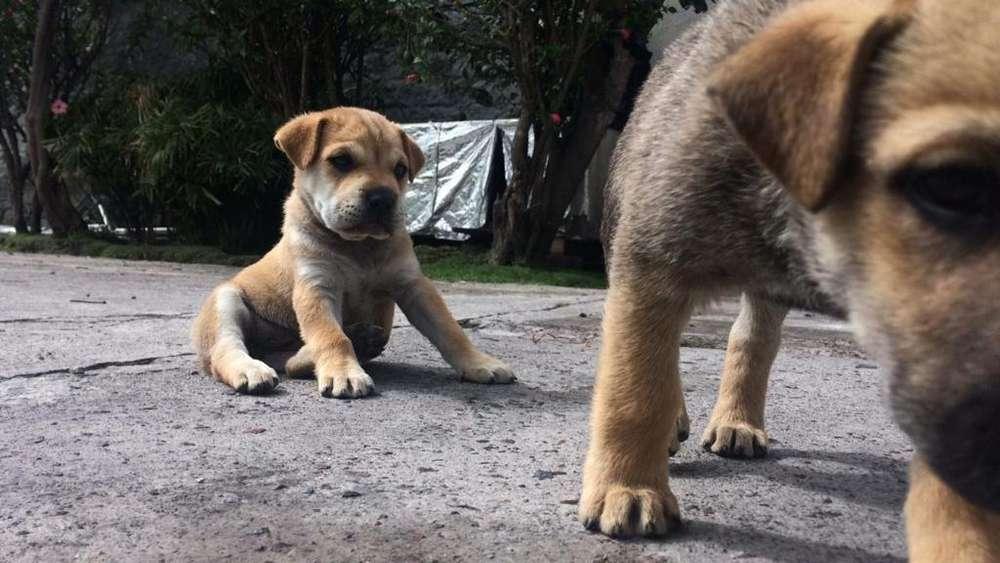Lindos Cachorritos Macho Y Hembra