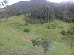 SE VENDE FINCA EN EL ALTO DEL VINO. Cundinamarca. Informes: 3112175503 3103427070 Jhonny Torres