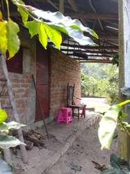 Venta finca cafetera sector Ancon Tesorito (ibagué)
