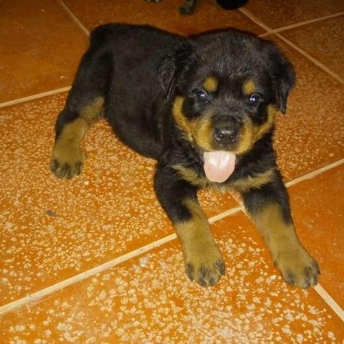 Cachorritos Abc 3008314682