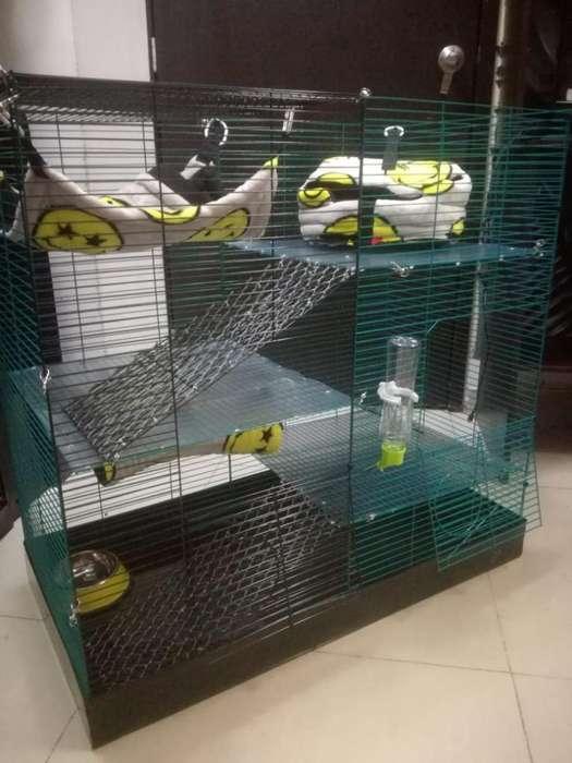 Jaulas para ratas…